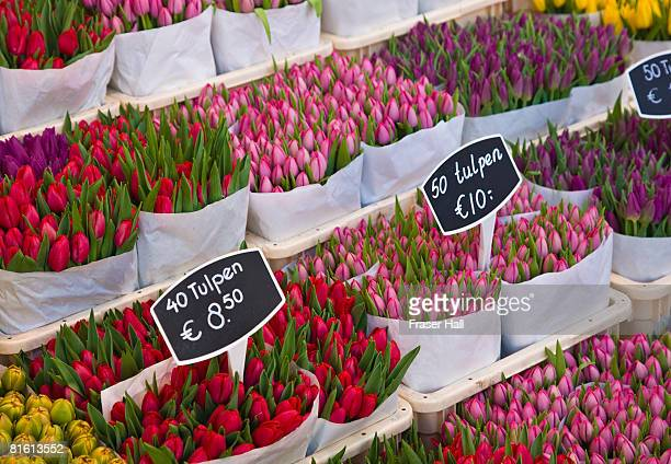 Tulips for sale, Amsterdam