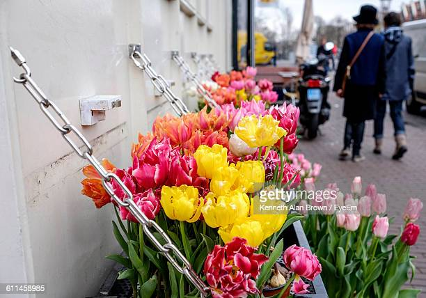 Tulips For Sale At Market Stall