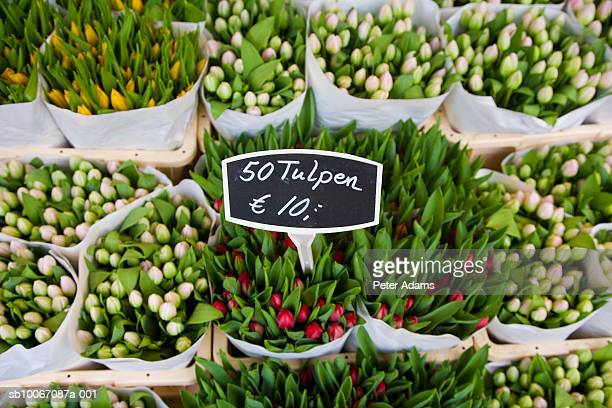 Tulips for sale in market, elevated view