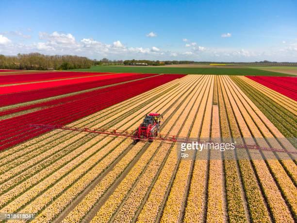 """tulpen die op een gebied met een landbouwgewassenspuit groeien - """"sjoerd van der wal"""" or """"sjo""""nature stockfoto's en -beelden"""