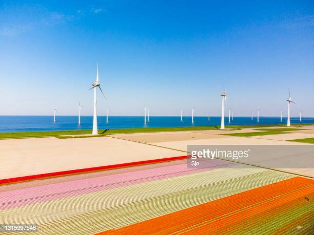 """tulips growing in agricutlural fields with wind turbines in the background during springtime seen from above - """"sjoerd van der wal"""" or """"sjo"""" stock pictures, royalty-free photos & images"""