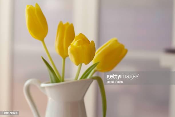 Tulips in a jar