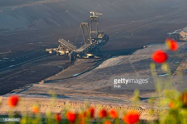 Tulips in front of a bucket wheel excavator in an open-pit mine, Garzweiler, North Rhine-Westphalia, Germany, Europe