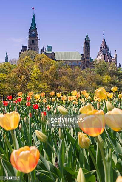 Tulips in front of Canada's Parliament Buildings