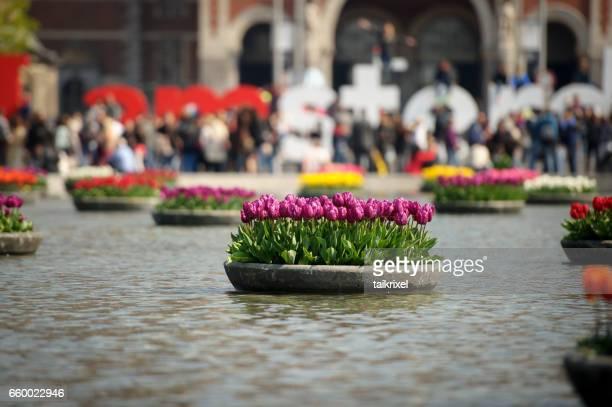 Tulpaner framför Rijksmuseum, Amsterdam, Nederländerna
