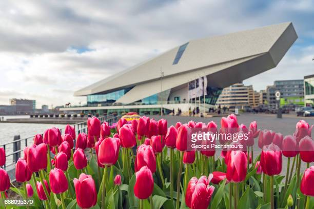 Tulips in front of the EYE film museum, Amsterdam