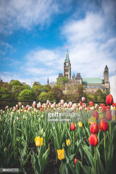 Tulips in front of the Peace Tower and Parliament Buildings