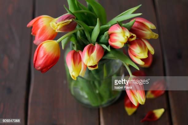 Tulips in jar