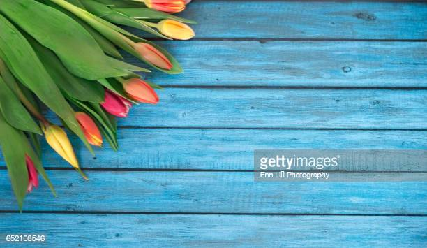tulips on wooden background - printemps photos et images de collection