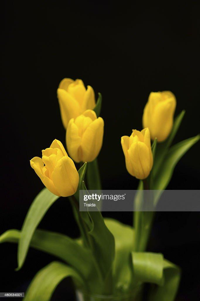 Tulipani : Foto stock