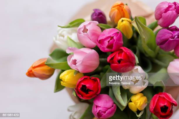 tulips - tulip stock pictures, royalty-free photos & images