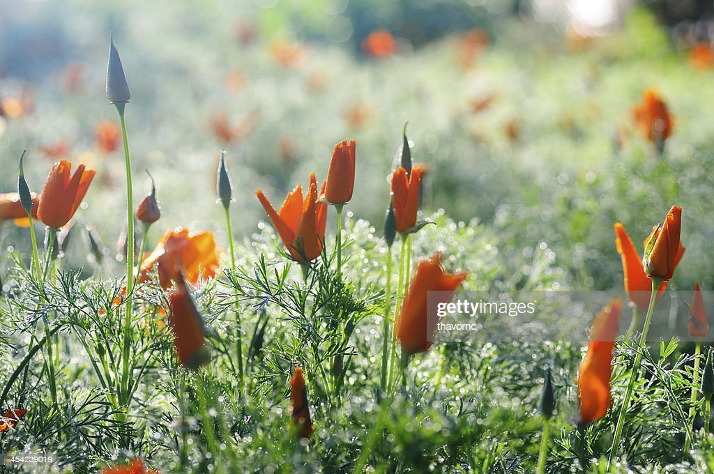 Tulips under the sun : Stock Photo