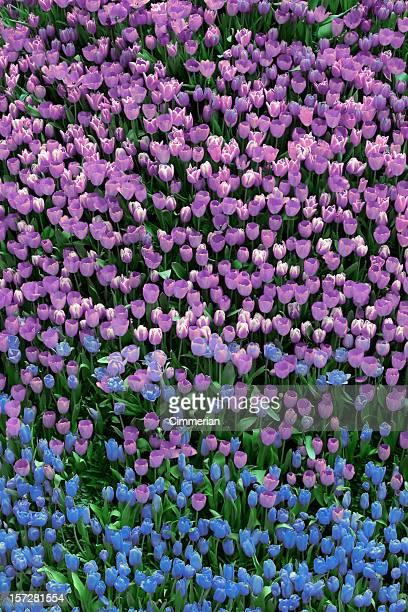 Tulpen-Tal