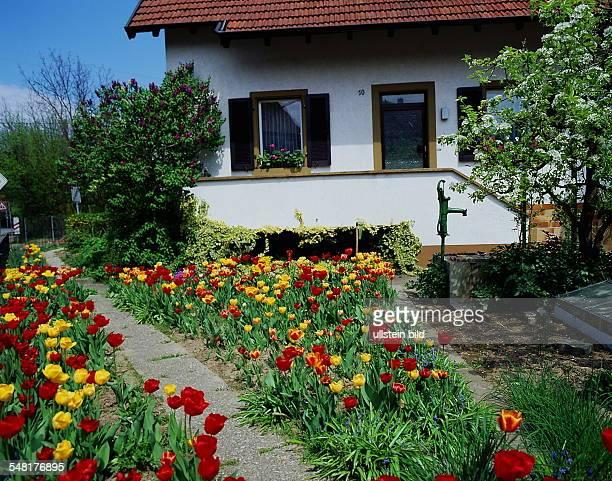 Tulpen in Hausgarten mit Wasserpumpe und Einfamilienhaus - 1996