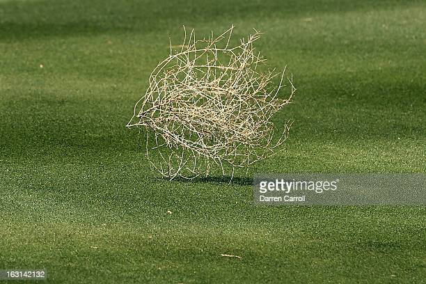 Tumble weed blows down the seventh fairway during the final round of the World Golf Championships Accenture Match Play at the Golf Club at Dove...