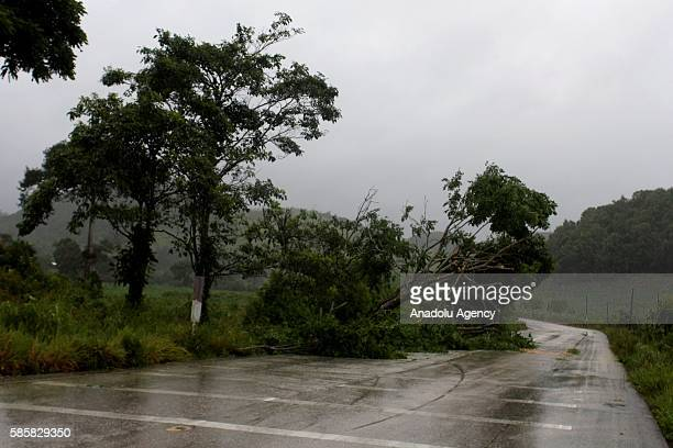Tumbled down trees block the road in Peten near the border to Belize Guatemala on August 4 2016 after the Hurricane EarlThe Tropical Storm Earl hit...