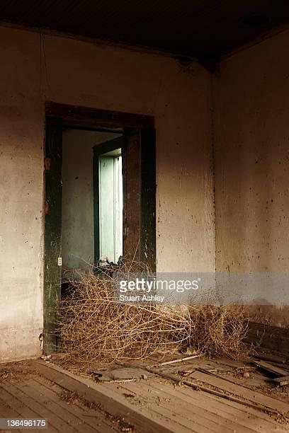 Tumbleweed in house