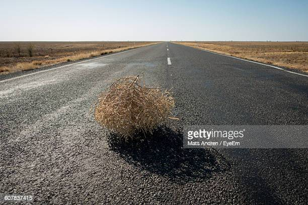 tumbleweed on road in desert - tumbleweed stock photos and pictures