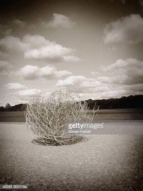 tumbleweed on rural road - tumbleweed stock photos and pictures