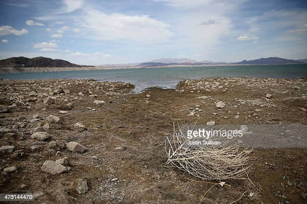 A tumbleweed sits on Boulder Beach at Lake Mead on May 12 2015 in Lake Mead National Recreation Area Nevada As severe drought grips parts of the...