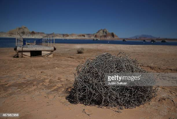 A tumbleweed sits on the shore of Lake Powell at the Wahweap Marina on March 28 2015 in Page Arizona As severe drought grips parts of the Western...
