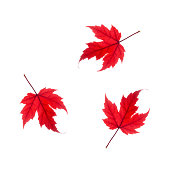 three red maple leaf tumbling white