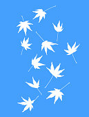 eleven white maple leaves colour manipulated