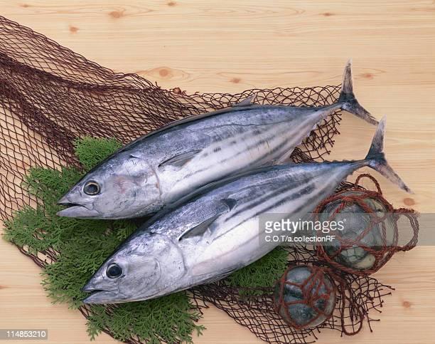 Tuna and Fishing Net