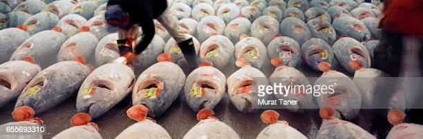 Tuna auction at Tsukiji Fish Market in Tokyo