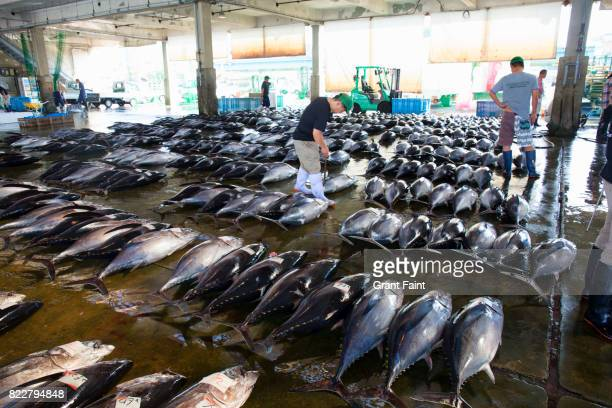 tuna auction boring time. - bluefin tuna stock pictures, royalty-free photos & images