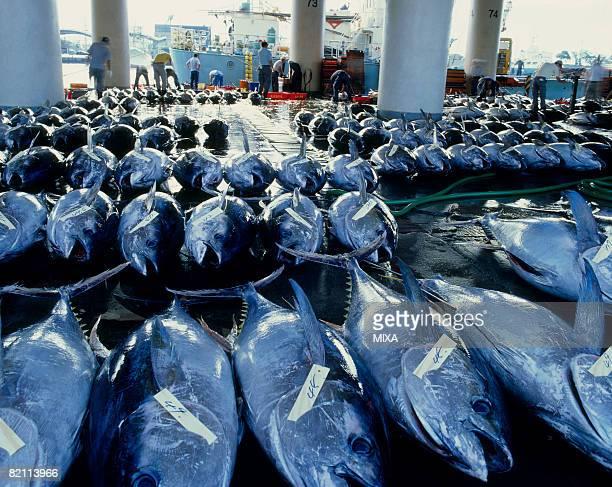 tuna auction - せり売り ストックフォトと画像