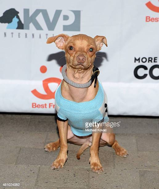 Tuna enjoys the 'More Than a Cone' art auction and campaign launch benefiting Best Friends Animal Society in Los Angeles where renowned artists...