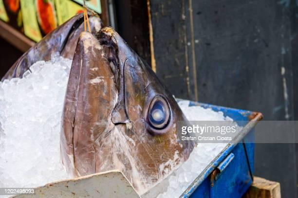 tuna for sale in tokyo tsukiji fish market  japan - cristian neri foto e immagini stock
