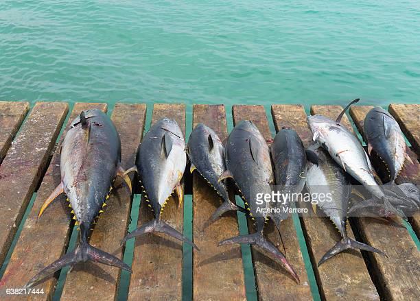 Tuna on the harbor in Cape Verde