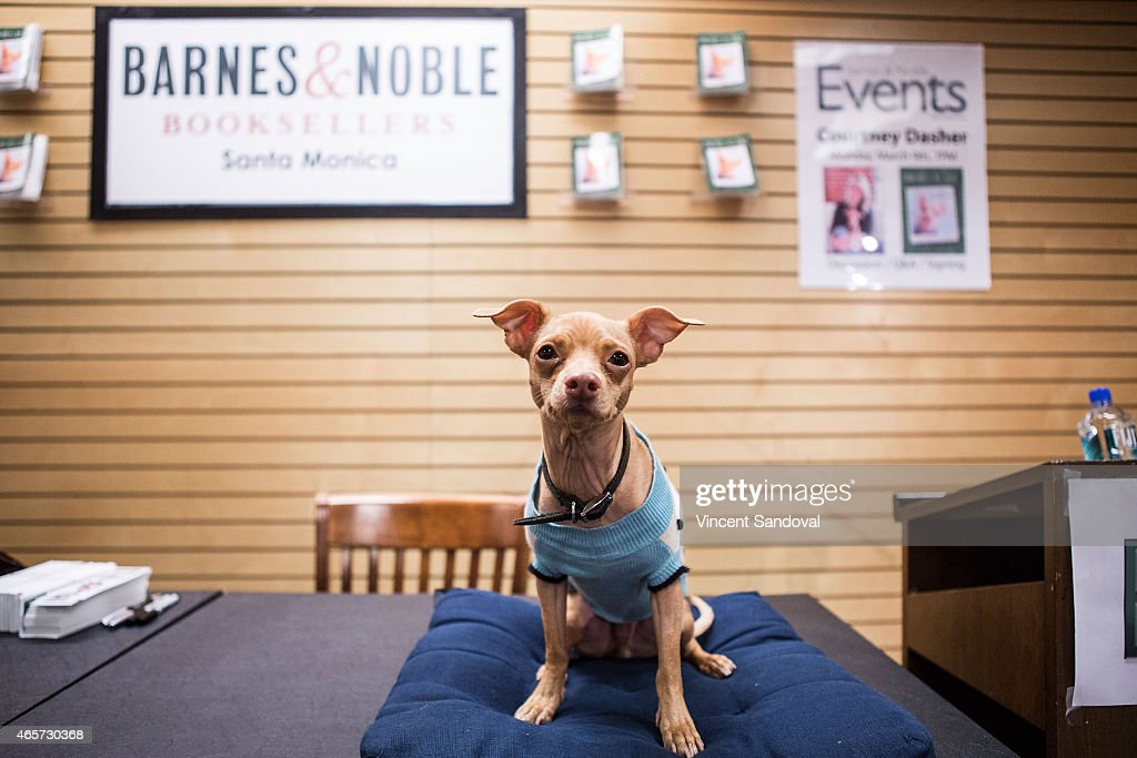 Tuna the dog attends the 'Tuna Melts My Heart: The Underdog With The Overbite' book signing and discussion at Barnes & Noble 3rd Street Promenade on March 9, 2015 in Santa Monica, California.