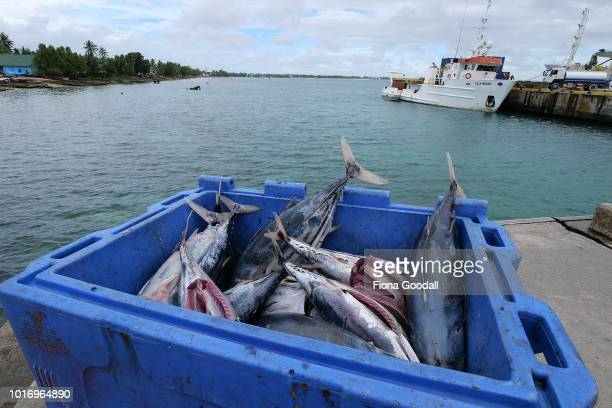Tuna to feed the Maratime Training Institue students at the wharf on August 15 2018 in Funafuti Tuvalu Fish are an important food source on the...