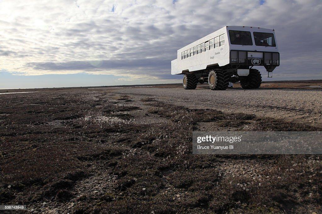 A tundra Buggy on Arctic Tundra : Stock Photo