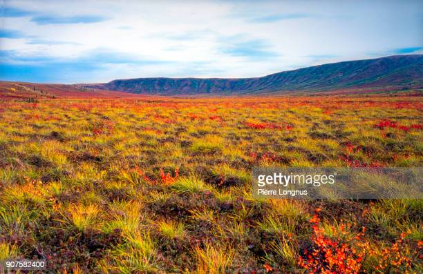 tundra changing color during arctic autumn in august - tombstone mountains, yukon, canada - tundra stock pictures, royalty-free photos & images