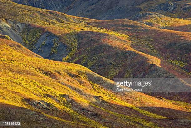 Tundra in the Ogilvie Mountains displaying vibrant autumn foliage, Tombstone Territorial Park, Yukon, Canada