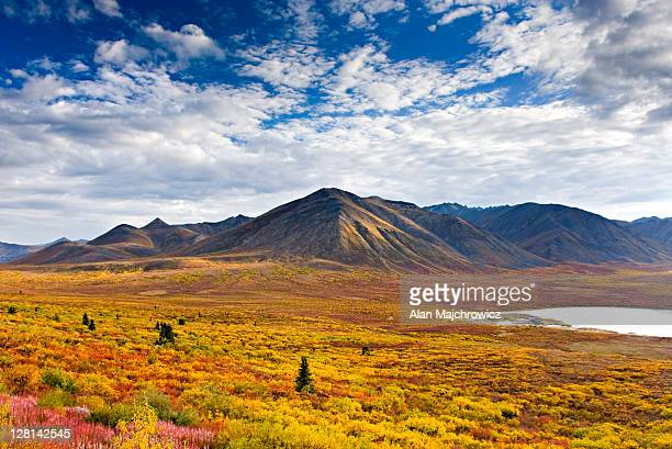 tundra in the ogilvie mountains displaying vibrant autumn foliage, tombstone territorial park, yukon, canada - territory stock pictures, royalty-free photos & images