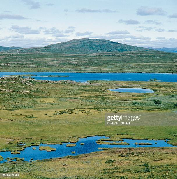 Tundra ponds Norway