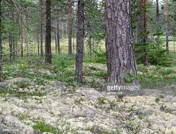 Tundra - und Waldlandschaft - 1999