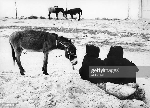 Tunesien Zwei Tunesier mit Esel undatiert