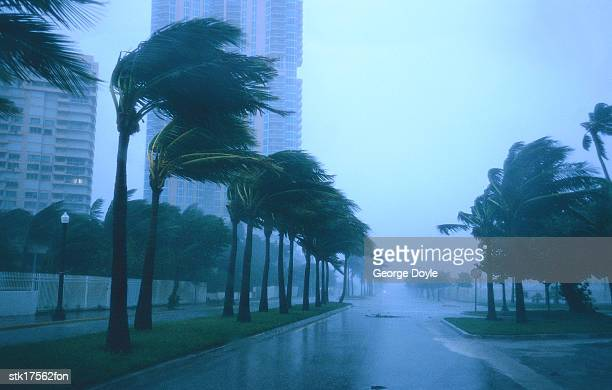 tungsten shot of a palm trees blowing in a storm
