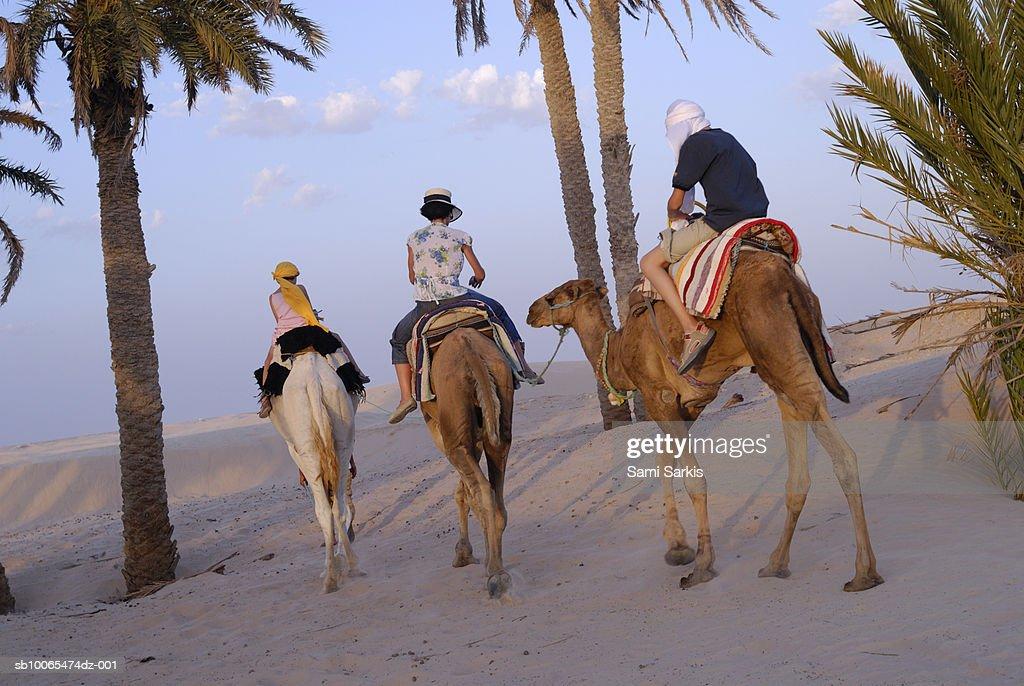Tunisia, Douz, Sahara Desert, family riding three camels, rear view : Stock Photo
