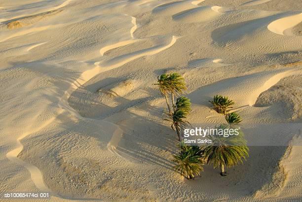 Tunisia, Douz, Sahara Desert, palm trees and sand dunes, aerial view