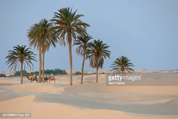 Tunisia, Douz, Sahara Desert, tourists on camel ride
