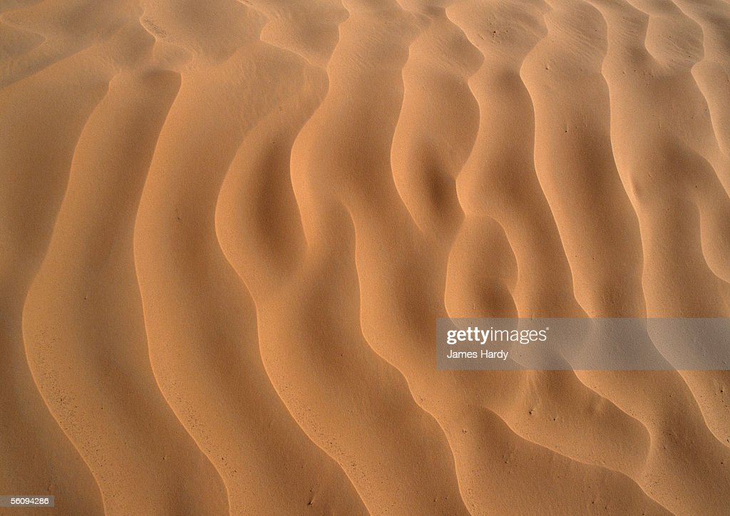 Tunisia, Sahara Desert, ripples in sand. : Stock Photo