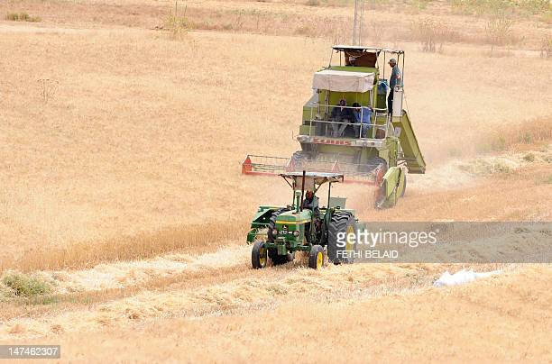 Tunisian farmers harvest a wheat field on June 29 in Kef northwestern Tunisia Record food prices last year and ensuing riots in a number of countries...