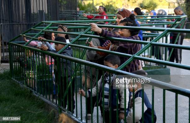 Tunisian visitors watch lions at the Belvedere Zoo which was closed for renovation works following an attack on a crocodile a month earlier in the...